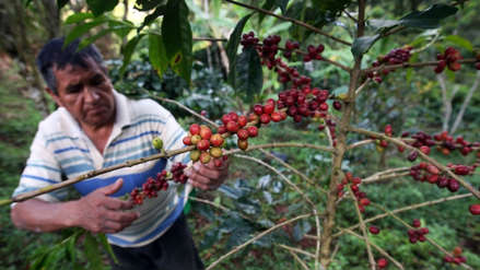 Estos son los mayores productores de café del mundo ¿Dónde se ubica Perú?
