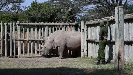 Científicos extraen óvulos de rinoceronte blanco para intentar salvar la especie