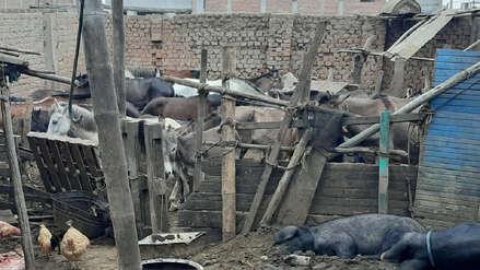Policía incautó 27 caballos y 8 burros cuya carne iba a ser vendida a mercados y restaurantes