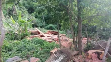 México: Dos taladores ilegales fueron sentenciados a plantar tres mil árboles y limpiar un río