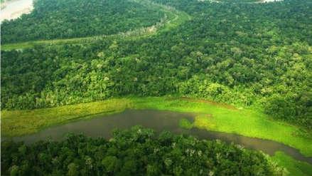 ¿Cuántas hectáreas de bosque amazónico pierde Perú al año y cuál es su impacto?
