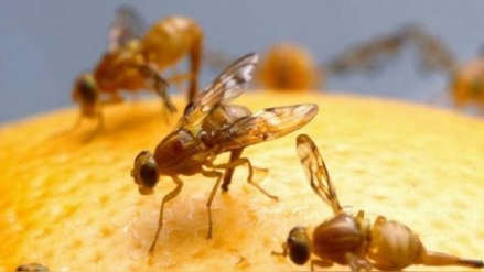Rusia detecta moscas portadoras del cólera en un cargamento de Ecuador