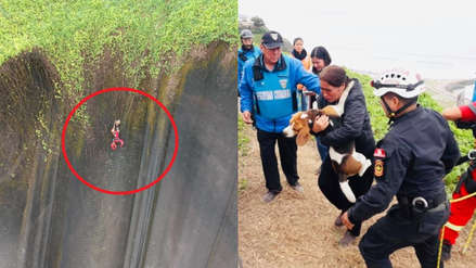 Miraflores: Rescatan a perro que quedó atrapado en malla de acantilado de la Costa Verde