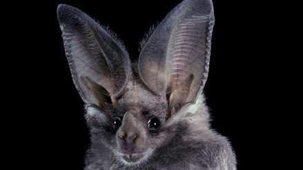 ¿Por qué los murciélagos necesitan ser conservados?