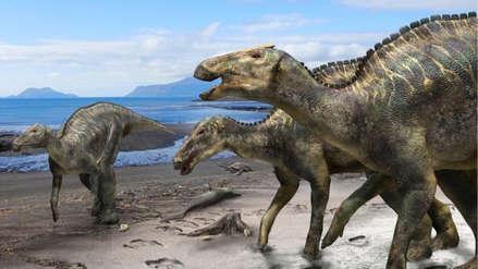 """""""El Dios dragón"""": Descubren en Japón una nueva especie de dinosaurio"""