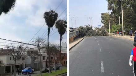 Senamhi: Anticiclón del Pacífico Sur genera vientos de hasta 35 km/h en Lima