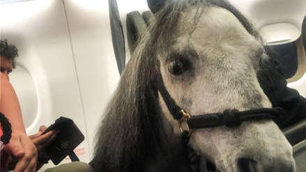 EE.UU.   Una mujer viajó en avión con su caballo que le brinda apoyo emocional