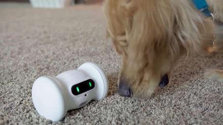 IFA 2019: Los inodoros conectados a Internet, 5G y robots domésticos entre lo más destacado de la feria