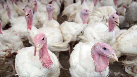 Argentina y Hong Kong también prohíben ingreso de pavos de Chile por gripe aviar