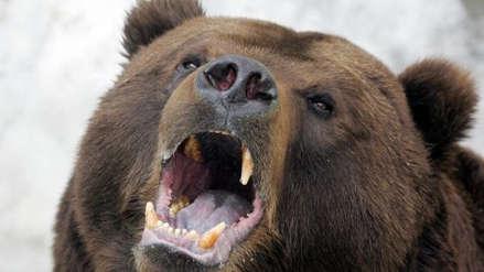 Cazador sobrevivió a ataque de oso gracias a los disparos de su esposa