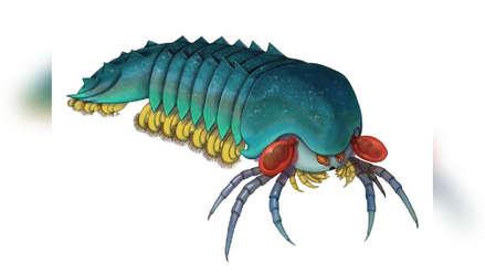 Este depredador ojón de 508 millones de años es el pariente más antiguo de arañas y escorpiones