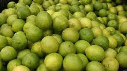 La temible plaga del limón que pone en riesgo el ceviche y parte de la gastronomía