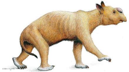 Gigantescos y musculosos: estudio revela el verdadero tamaño de antiguos marsupiales