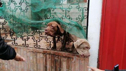 Brigada Canina de Surco rescató a uno de tres perros maltratados en casa de urbanización Los Precursores