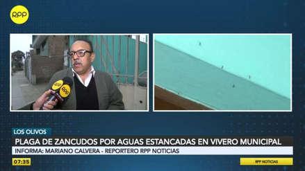 Plaga de zancudos afecta a vecinos de Los Olivos