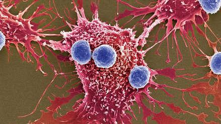 Células del cáncer se vuelven 'caníbales' para sobrevivir a la quimioterapia