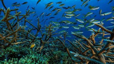 El papel del océano en revertir el cambio climático podría ser mucho mayor de lo pensado
