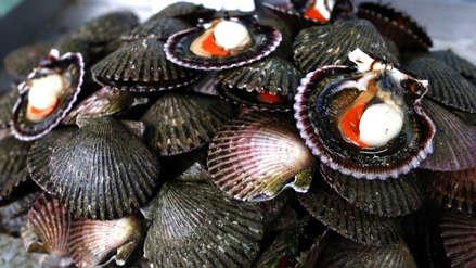 ¡Atención! Confirman ausencia de virus de hepatitis A en conchas de abanico del Callao