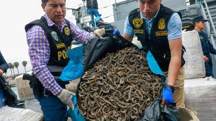 Decomisan más de 12,3 millones de caballitos de mar extraídos ilegalmente en el Callao