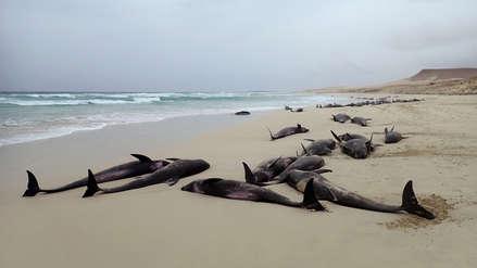 La misteriosa muerte de más de 100 delfines  en una playa de Cabo Verde [Video]
