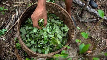 Perú alerta que se produce más cocaína con igual cantidad de hoja de coca