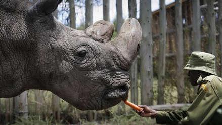 Los rinocerontes en riesgo de extinción en Botsuana por la caza furtiva