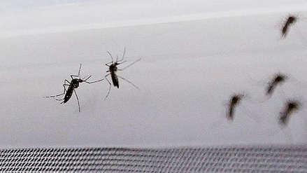 Más de 100 muertos y 93.700 casos en el peor brote de dengue en Bangladesh