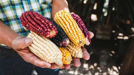 El maíz: El ingenio y la creatividad peruana le dan vida a nuestra Mama Sara