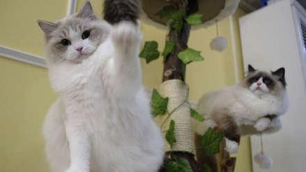 Condenan a un hombre que mató una gata preñada dentro de un secador de ropa