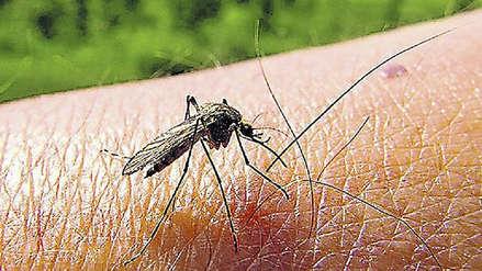 6000 casos de dengue en el Perú: cómo reconocer los síntomas [AUDIOS]