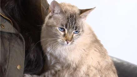 Recomendaciones para el cuidado de los gatos [AUDIOS]
