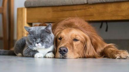 Coronavirus en Perú: Recomendaciones para cuidar de nuestras mascotas en tiempos de cuarentena obligatoria