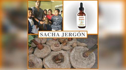Sacha jergón: producto peruano ayuda a mantener las defensas altas