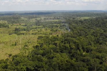 COVID-19: ¿por qué la deforestación y la pérdida de especies abren la puerta a nuevas enfermedades?
