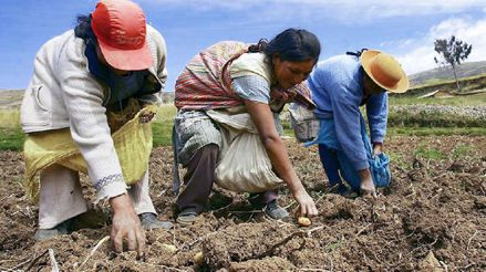 Senasa implementa protocolos de higiene para agricultores y transportistas [Audiogalería]