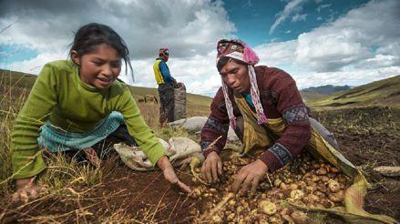 Minagri ofrecerá subsidios para pequeños agricultores a través de Agroideas [Audiogalería]