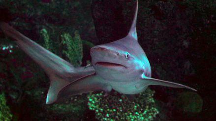 Los ataques de tiburones se redujeron en el mundo por el coronavirus