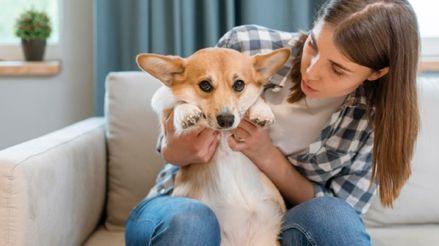 Cuarentena: ¿Cómo saber si mi mascota tiene sobrepeso?