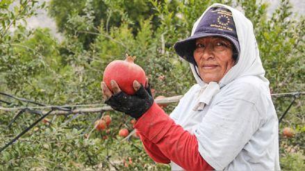 Bancada de Somos Perú plantea pensión de jubilación para agricultores