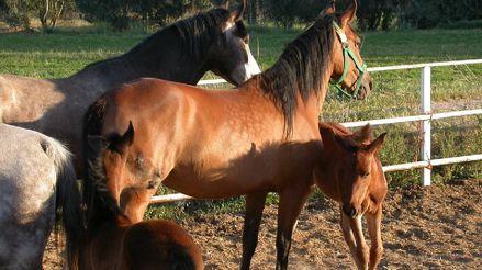 Costa Rica avanza en tratamiento de la COVID-19 a base de plasma de caballos
