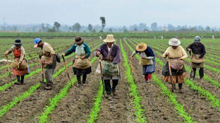 En qué consiste el catálogo virtual de productos agrarios