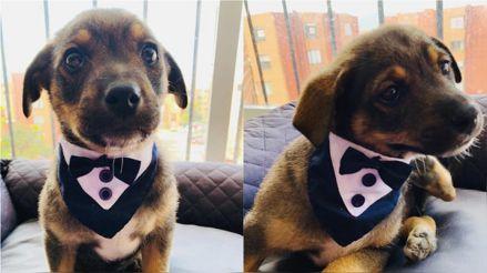 La historia de Vicente, el perro que fue abandonado el día en el que iba a ser adoptado y se volvió viral