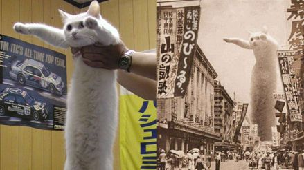 El gato del famoso meme 'Longcat' falleció a más de 18 años de edad