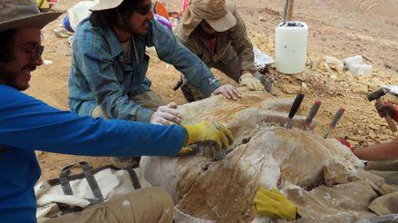 Chile: Hallan fósiles de un gran depredador marino del Jurásico de unos 160 millones de años de antigüedad