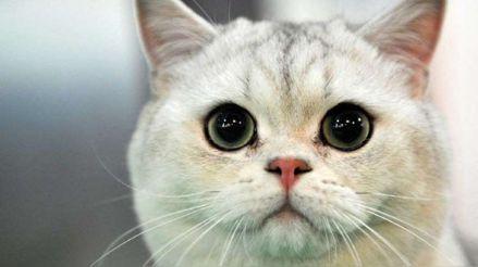 Mascotas: ¿Por qué es importante la tenencia responsable?