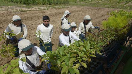 Nueva ley agraria: ¿Cuál sería su impacto en las empresas del sector?