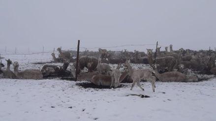 Arequipa: Caída de nieve y granizo afecta a cerca de mil familias
