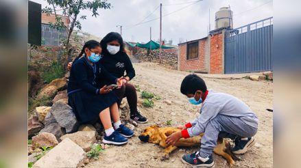 Año escolar 2021: Niños que viven al pie del Misti en Arequipa no acceden a clases por falta de equipos [VIDEO]