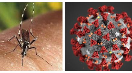 Dengue y COVID-19: ¿Cuáles son sus síntomas, cómo prevenirlos y cómo diferenciarlos?