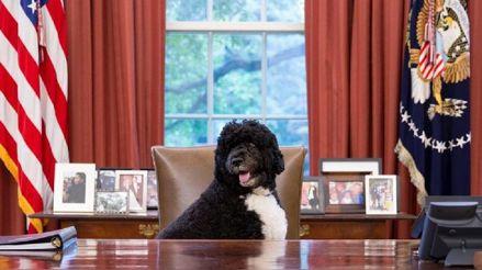 Muere Bo, el perro de Barack Obama y estrella de la Casa Blanca